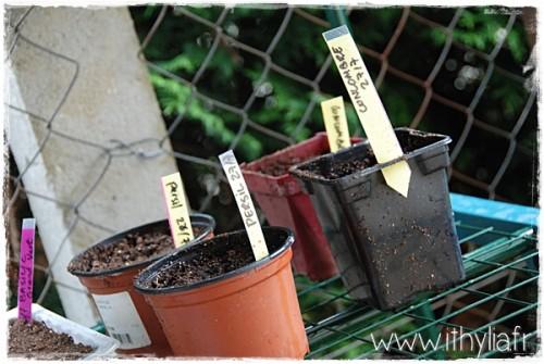 Mon jardin ithylia (11)